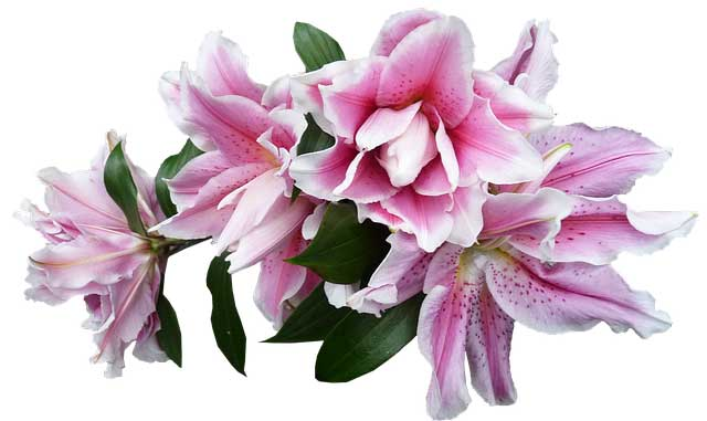 Lilien stehen für Unschuld, die Hoffnung sowie die Reinheit