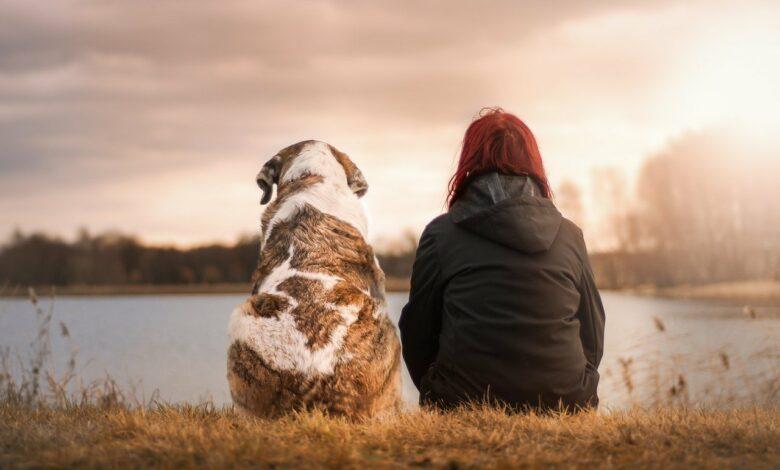 Mitfühlende Sprüche zum Verlust eines Haustieres