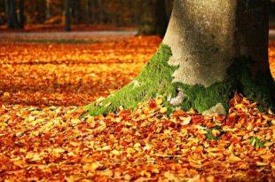 Baumbestattung im Friedwald oder Ruheforst